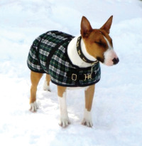 Gear_foggymountaindogcoat2.jpg
