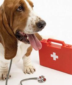 Pet First Aid.jpg