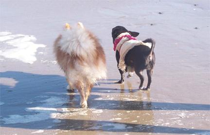 beach dogs.jpg