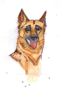 german shephed drawing.jpg