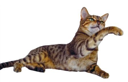 June Cat.jpg