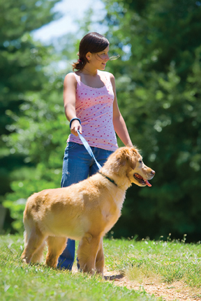 Leash law article image.jpg