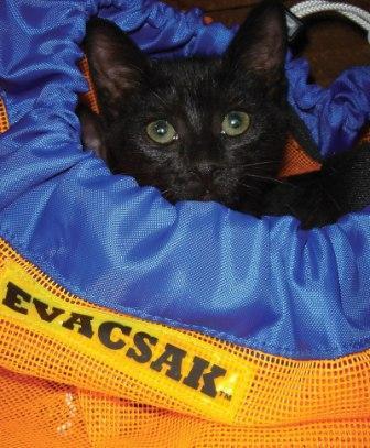 Here Kitty-evacsak.jpg