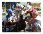 DoveLewis Dogwash volunteers.jpg