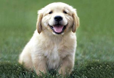 Attorney puppy.jpg