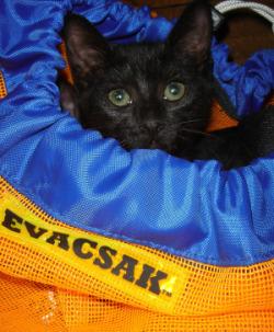 SpotNov09_Disaster_Evacsac_kitten.jpg
