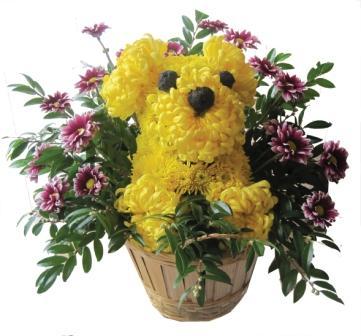Floral Dog.jpg