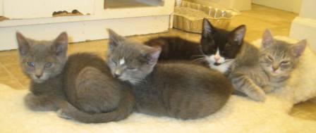 Foster-kittens.JPG
