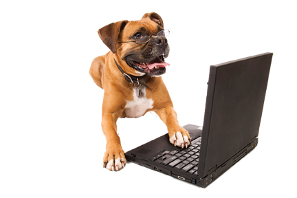 dog laptop.jpg