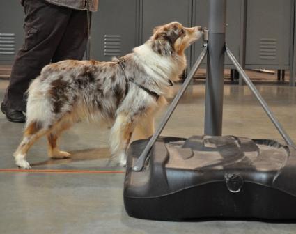 Tracking dog.jpg