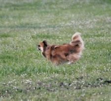 Lure Coursing 2.jpg