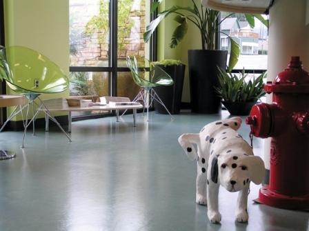 rose city vet lobby.jpg
