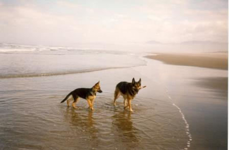 german shepherds beach.jpg