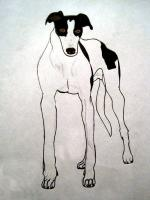 Greyhound drawing.jpg