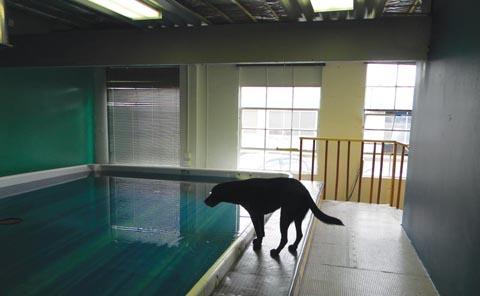 Fidos-poolside.jpg