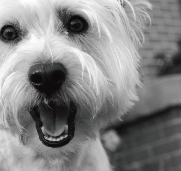 daycare tips-white dog.JPG