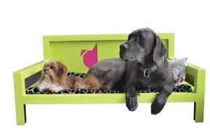 sniff-dogs.jpg