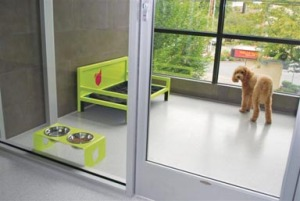 New Doggy Hotel About Style Comfort And Community Spot