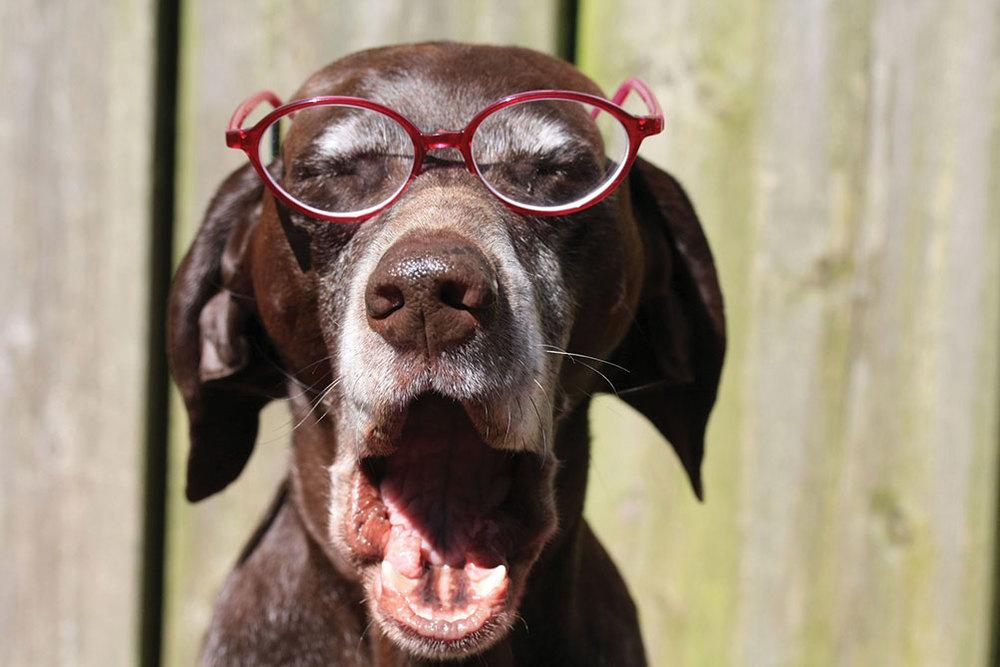 OldDogGlasses.jpg