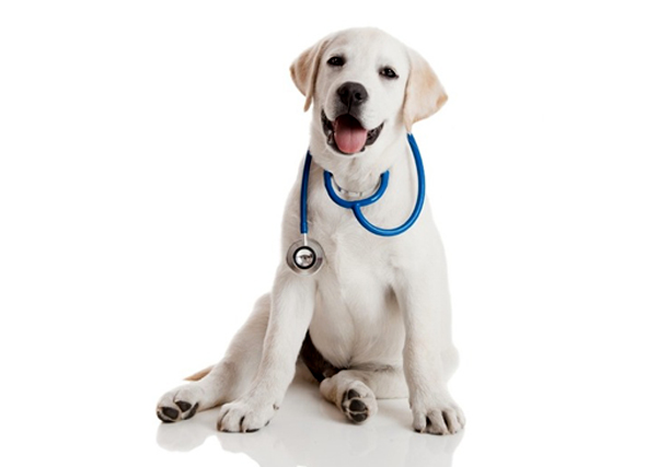Dog-with-stethoscope.jpeg