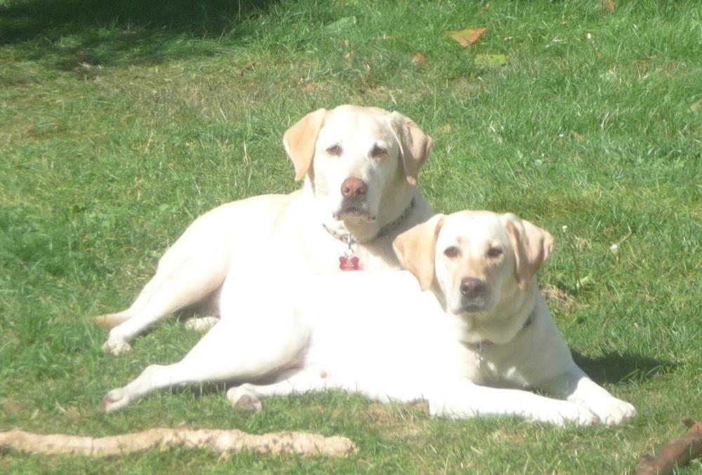 Jake & Jessie