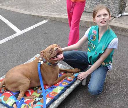 CCDS Ambassador dog Scooter with Girl Scout troop member