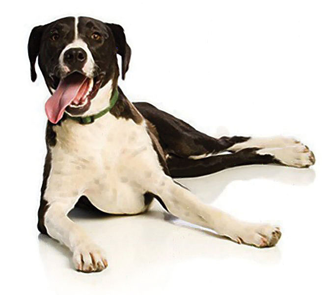 dogs-white1---2-1.jpg