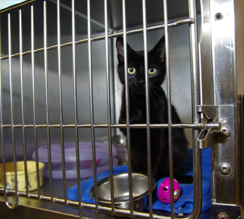 Kitten awaits new family at shelter