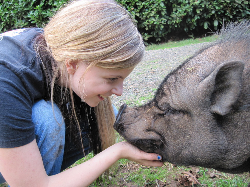 Volunteer Hannah and Hank the Pig exchange love