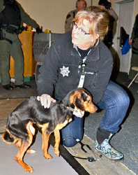 Dr. Kris Otteman, OHS Director of Shelter Medicine, examines dog during rescue in Brooks.