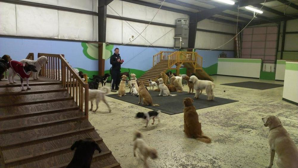 Top Dog Daycare Boarding And Training