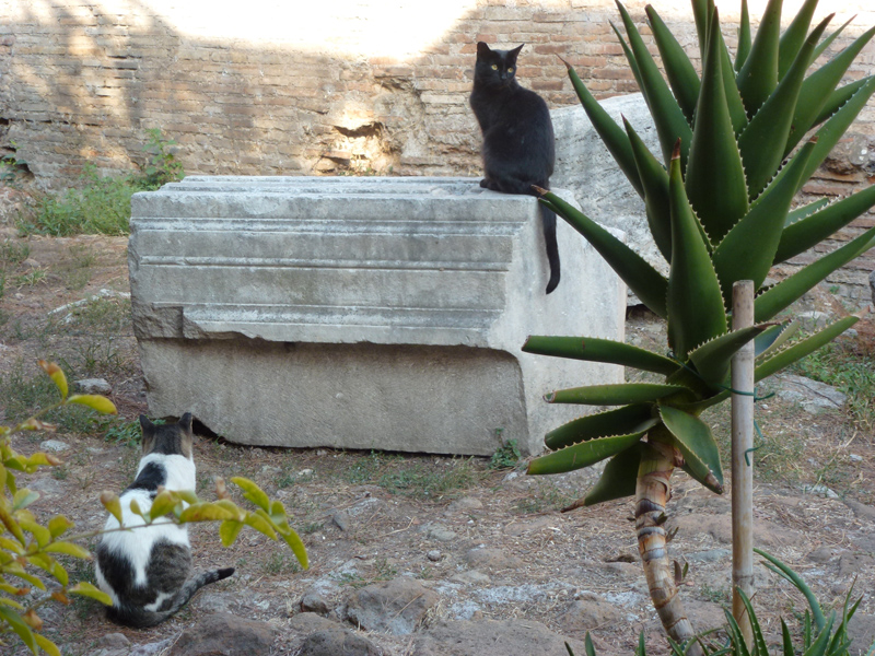 La Torre Argentina cats on ruins.jpg