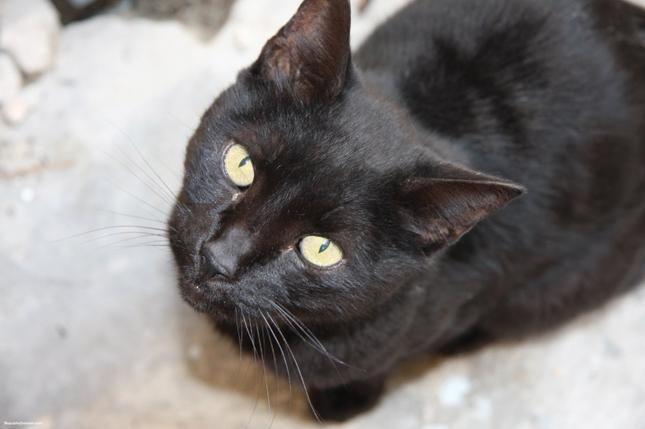 Black-Cat-2.jpg