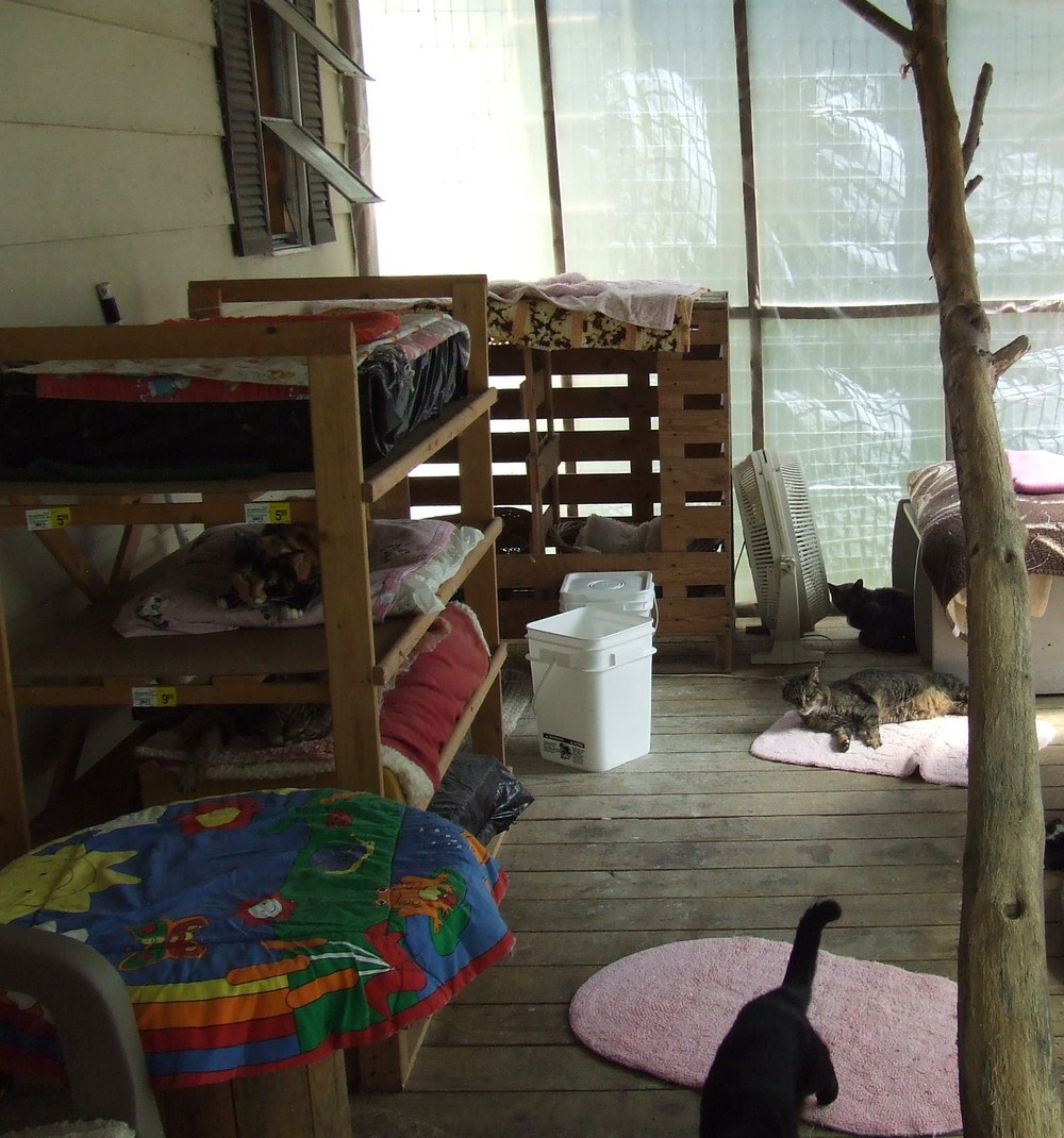 Catroom at Catnip Sanctuary