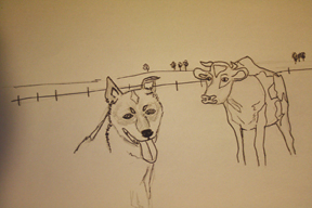 cattleDogDrawing.jpg