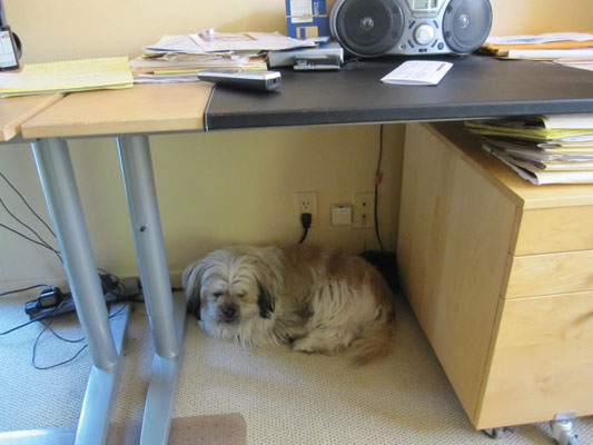 Photo-Fetch_underdeskgizsleeps.jpg