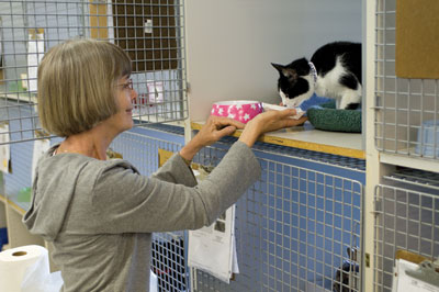 Volunteer greets kitty at CAT © Lamm Photography
