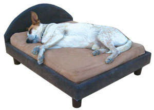 fetch_Dog_bed.jpg