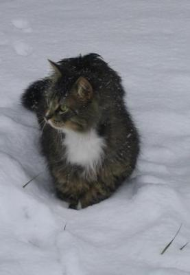 Snow Cat 6.JPG