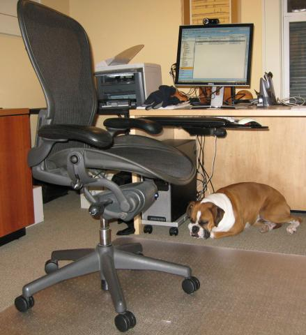Bella Workplace #1.jpg