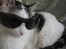 Bob was one cool cat