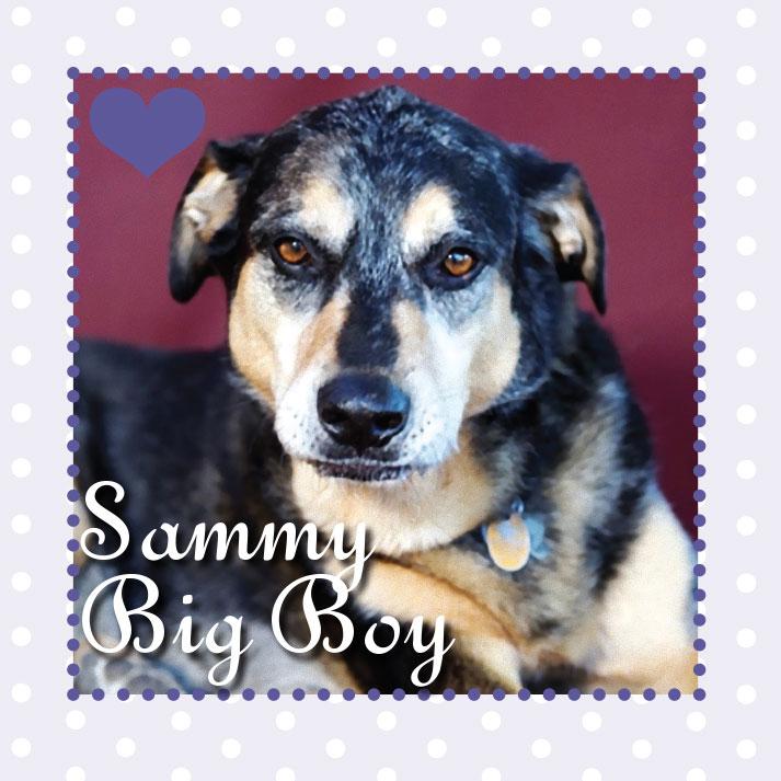 SammyBigBoy.jpg