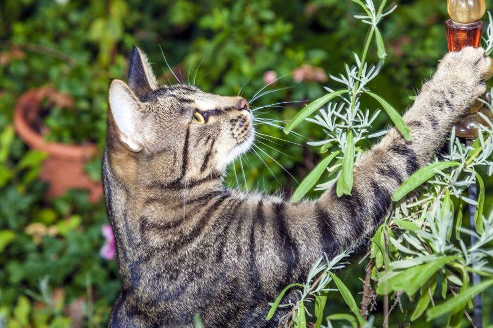 CatGarden.jpg