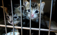 feral_kittens.png