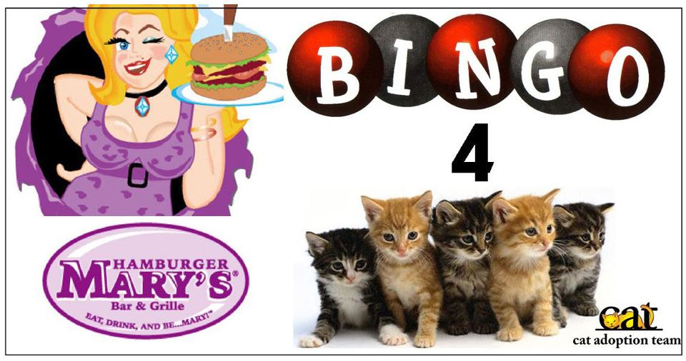 cat_bingo.jpg