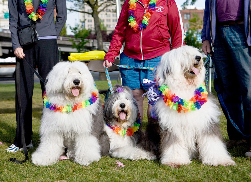 "Members of Doggie Dash team ""Shaggadellic Sheepies.""  Photo by Andrea Lorimor"