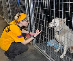 Emily Davidshon, OHS employee, shown volunteering at the Brooklyn shelter helping animals stranded by Hurricane Sandy.