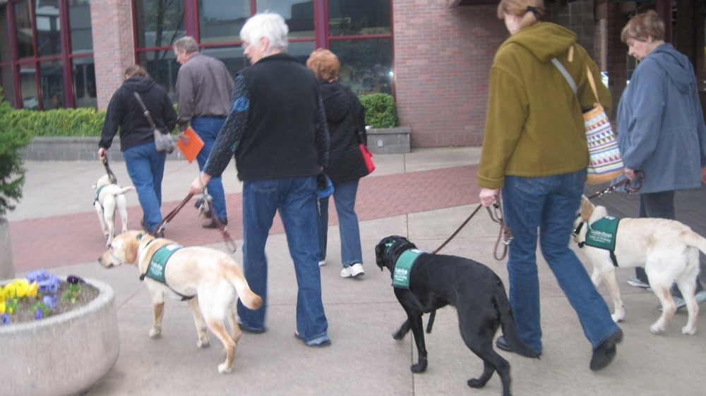 The Puppy Club on a walkabout near the Eugene downtown bus station.