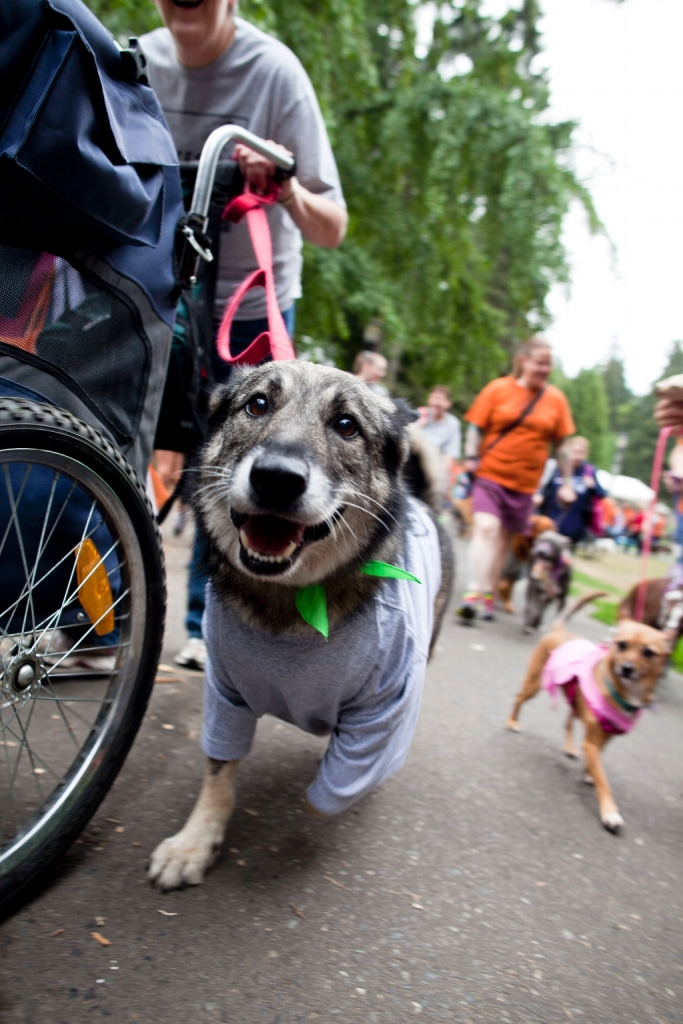 Photo-FetchStrutYourMutt.jpg