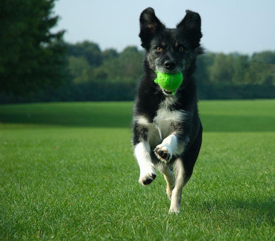 dog_park.jpg